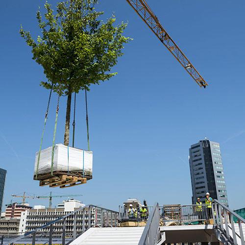 opdracht Arbor Consultancy moreelsebrug Utrecht naar plek hijsen