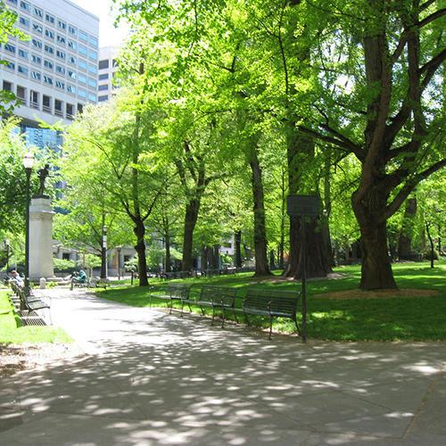 Bomen die te zien zijn in het park