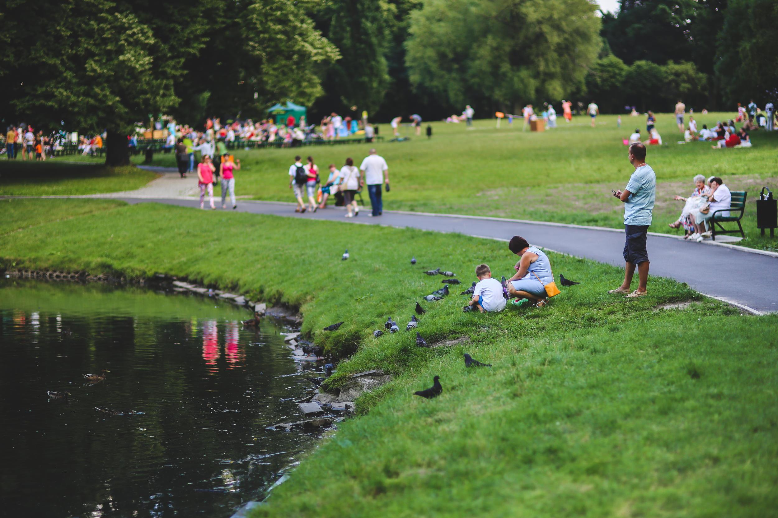 foto van nature met vogels en mensen