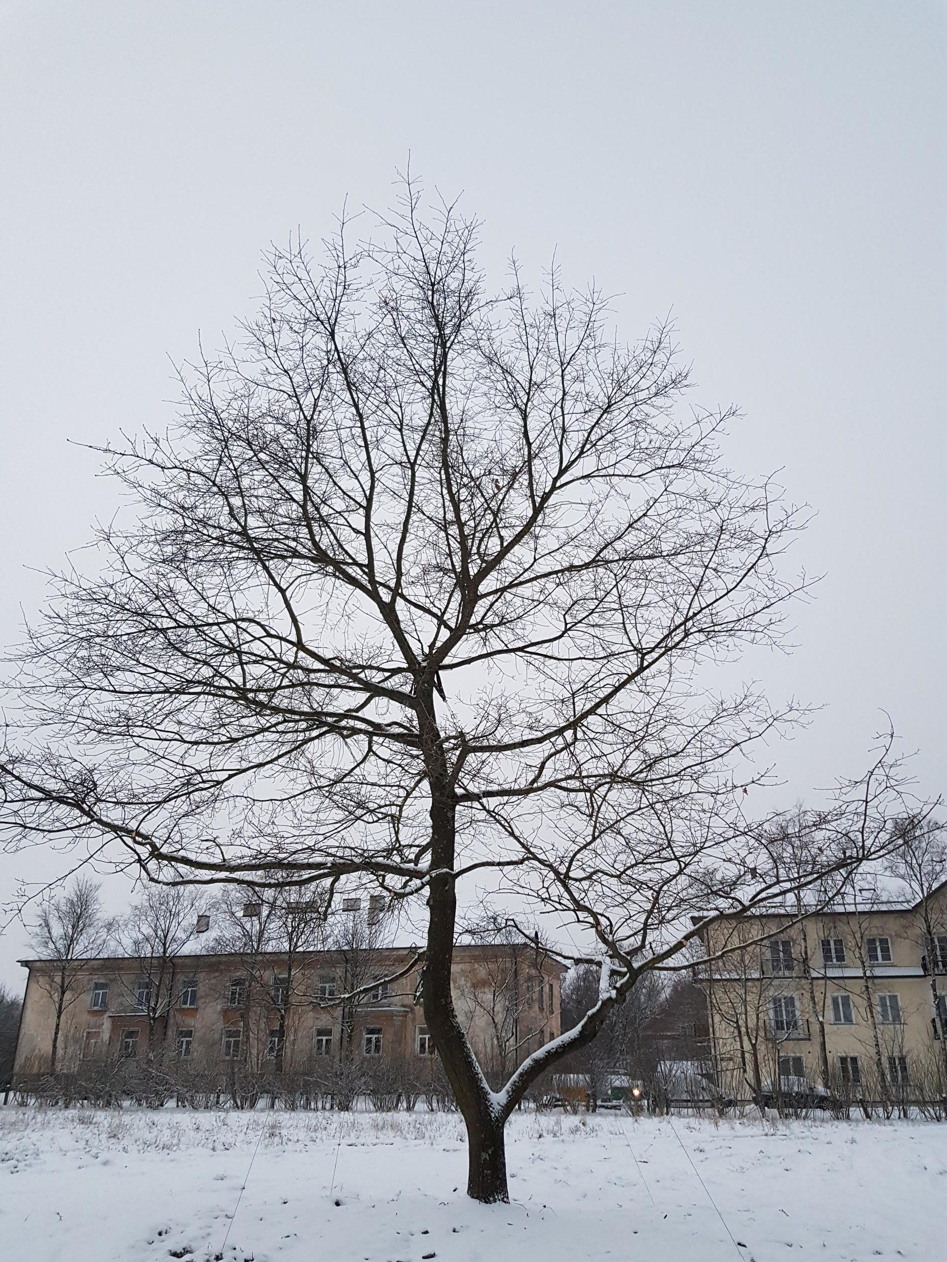 Verplanting Estland